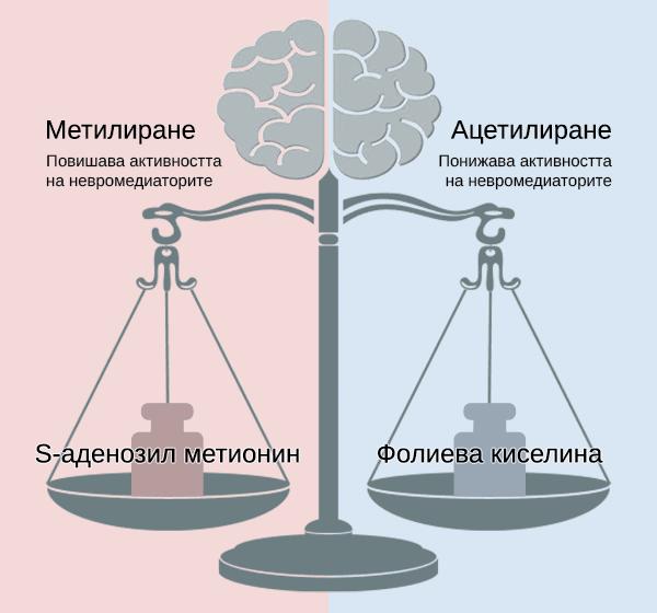brain_scales